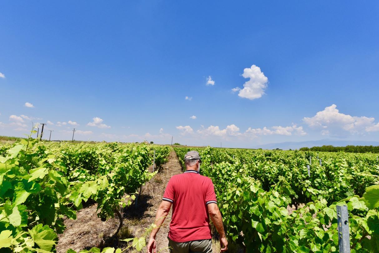 George Kitos walking in his vineyard in Sotirios
